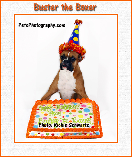 Richie Schwartz Pet Photography on Buster Boxer's Birthday